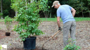 Be-a-Better-Gardener, What's New with Tree Planting