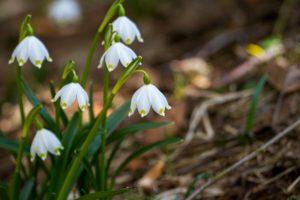 Be-a-Better-Gardener Naturalizing Bulbs