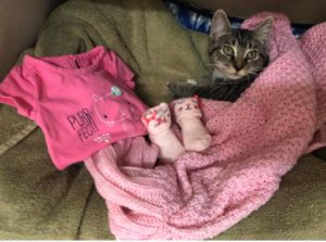 Pets of The Week, Boo Boo and Kittens