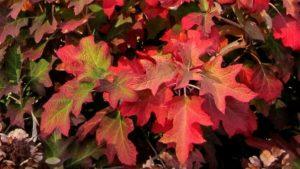 Bringing Autumn's Color into Your Landscape