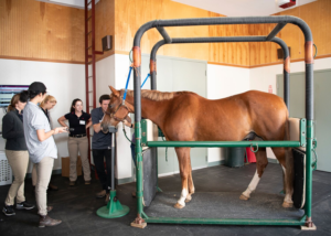 VETERINARY STUDENTS ATTEND THIRD ANNUAL EQUINE EVENT