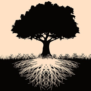 Genealogy Workshop, Interested in discovering your Revolutionary Roots?