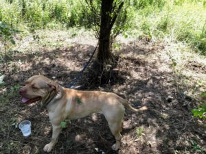 New York State Humane Association offered a $1,000.00 reward for information leading to the arrest and conviction of any person or persons responsible for the neglect and abandonment of this dog