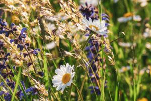 Be-a-Better Gardener, Meadow Planting Basics