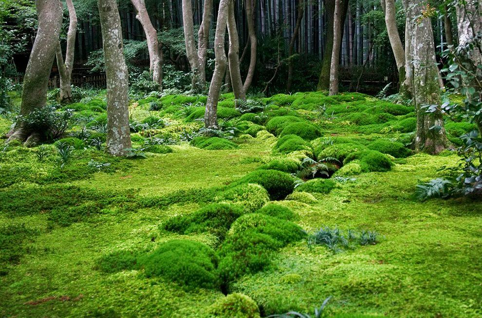 Be A Better Gardener Mossin Annie And Some Moss Garden Wisdom