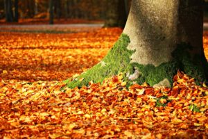 The Science of Autumn Leaf Management