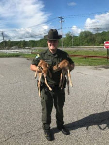 New York State Department of Environmental Conservation (DEC) Environmental Conservation Police Officers Double Fawn Rescue – Putnam County
