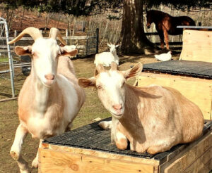Stories about the Animals at a Farm Sanctuary