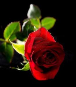 Obituary,   Erna (Ann) D. Williams